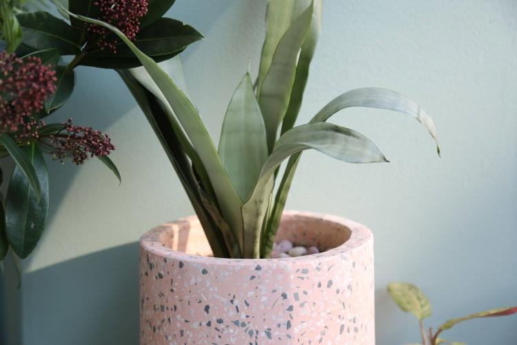 shutterstock_1612677094_Pflanze-Planterior-Moonshine-Sansevieria-Grun_tiny_750
