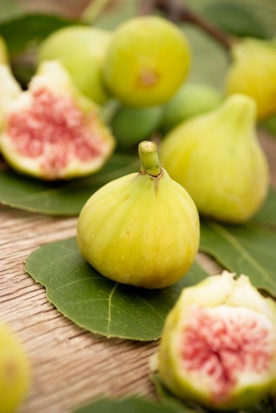 Feigenbaum (Ficus) grüne Frucht Restposten