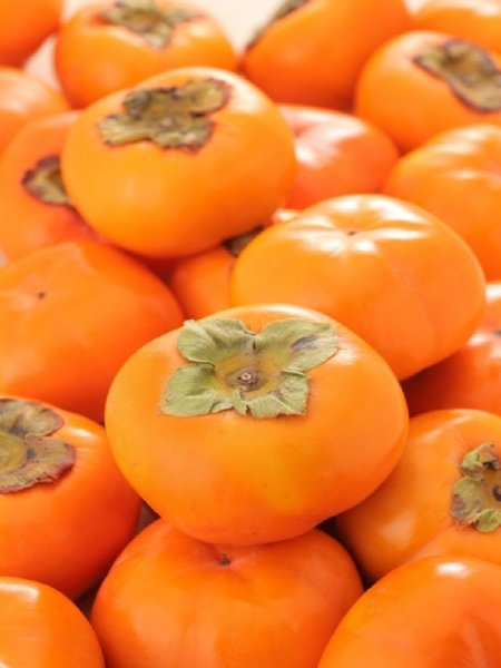 Kakibaum (Sharonfrucht, Götterfrucht) Schale