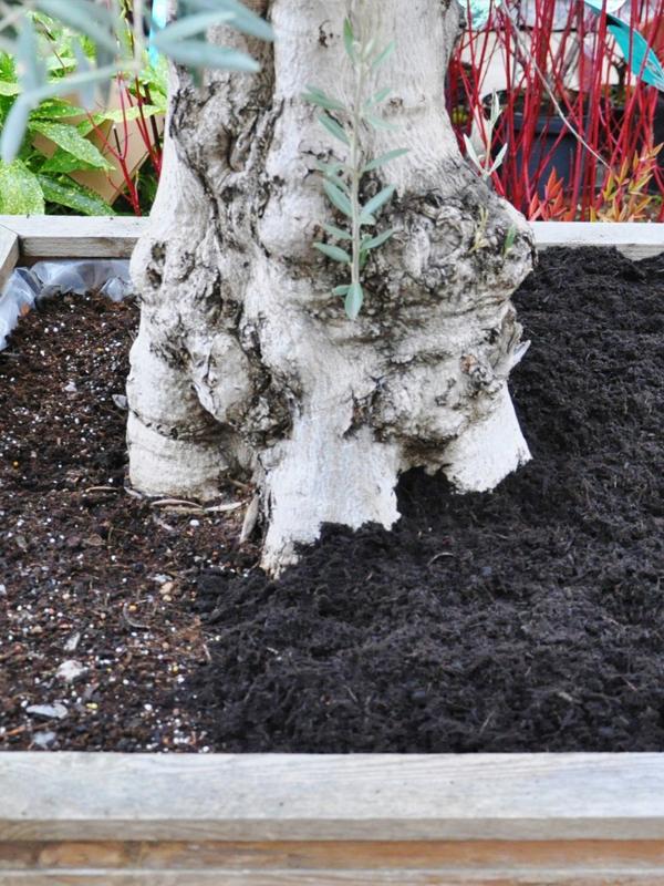 die gartenfaser optimaler winterschutz f r ihre beete und k belpflanzen der palmenmann. Black Bedroom Furniture Sets. Home Design Ideas