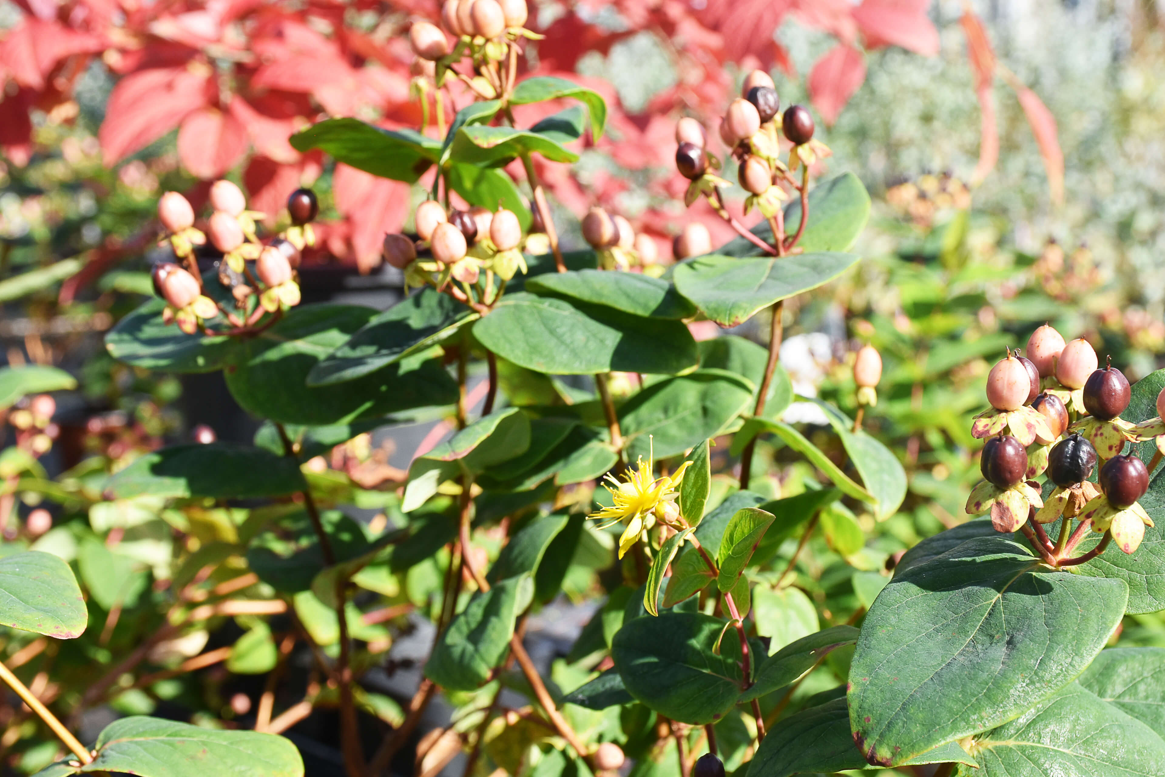 herbstbepflanzung-1