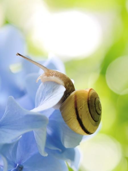 Blog_Pflanzenschutz2