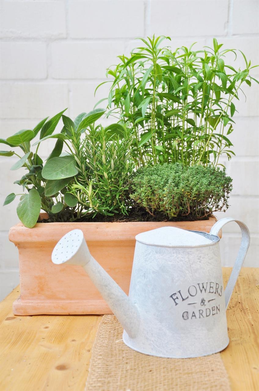 Kräuter-Mix (4 Pflanzen)