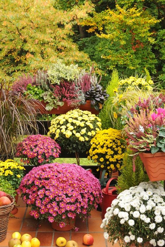 Die Herbstbepflanzung Farbenfrohe Arrangements Für Beete Balkon