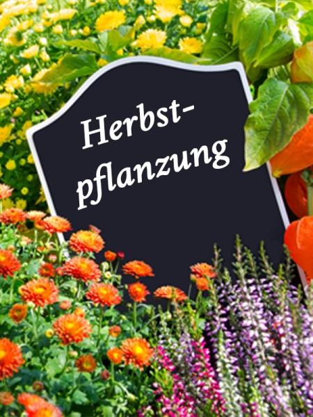 Blog_Herbstpflanzung59c230eaef78e