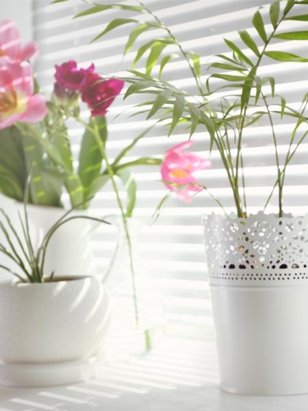 Blog_Zimmerpflanzen-eingewohnen