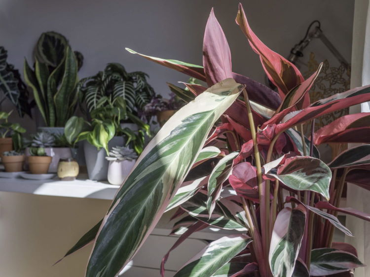 AdobeStock_341799950_A-collection-of-indoor-house-plants_doleesi_tiny_750