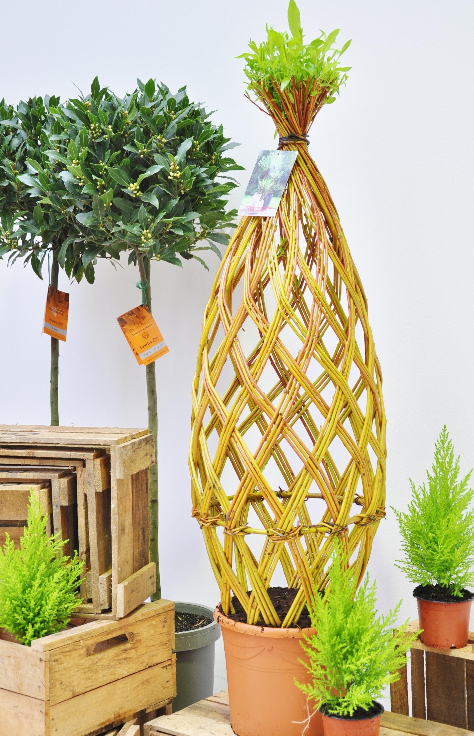 weidenbaum geflochten hell gro e kugel neu der palmenmann. Black Bedroom Furniture Sets. Home Design Ideas